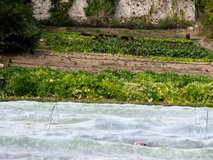 Jardins de la Marette : les planches de culture