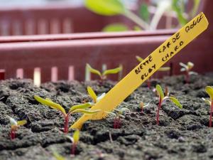 Jardins de la Marette : Les semis