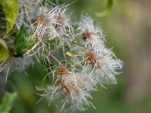 Jardins de la Marette : Plante aromatique