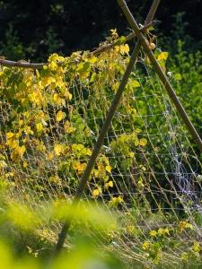 Jardins de la Marette : Culture bio des haricots