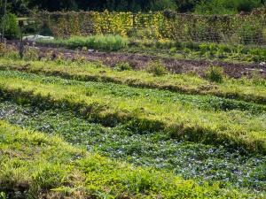 Jardins de la Marette : La cressonière