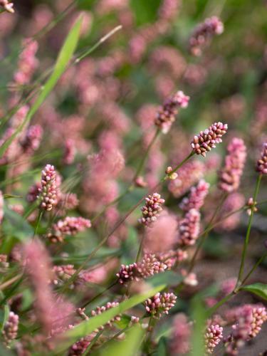 Les Jardins de la Marette - Maraîchage Biologique - Biodiversité